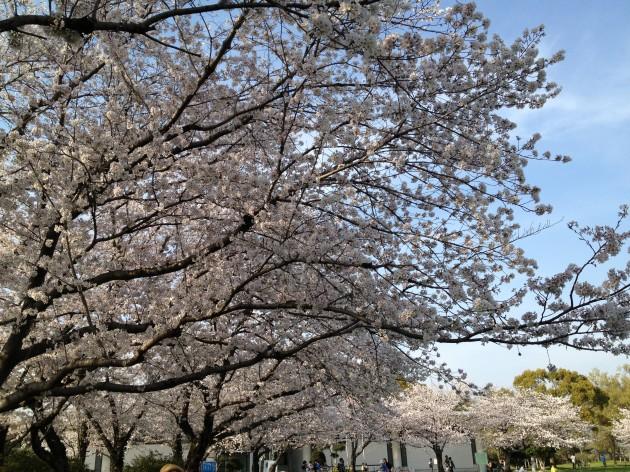 Photo 2014-03-28 16 28 54